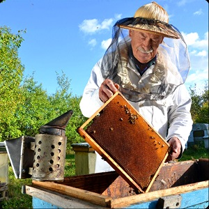 Ogłoszenie darmowe. Lokalizacja:  NJ PA NY. KUPIĘ / SPRZEDAM - Zwierzęta domowe. Sprzedam pszczoly. Startery czyli okolo.