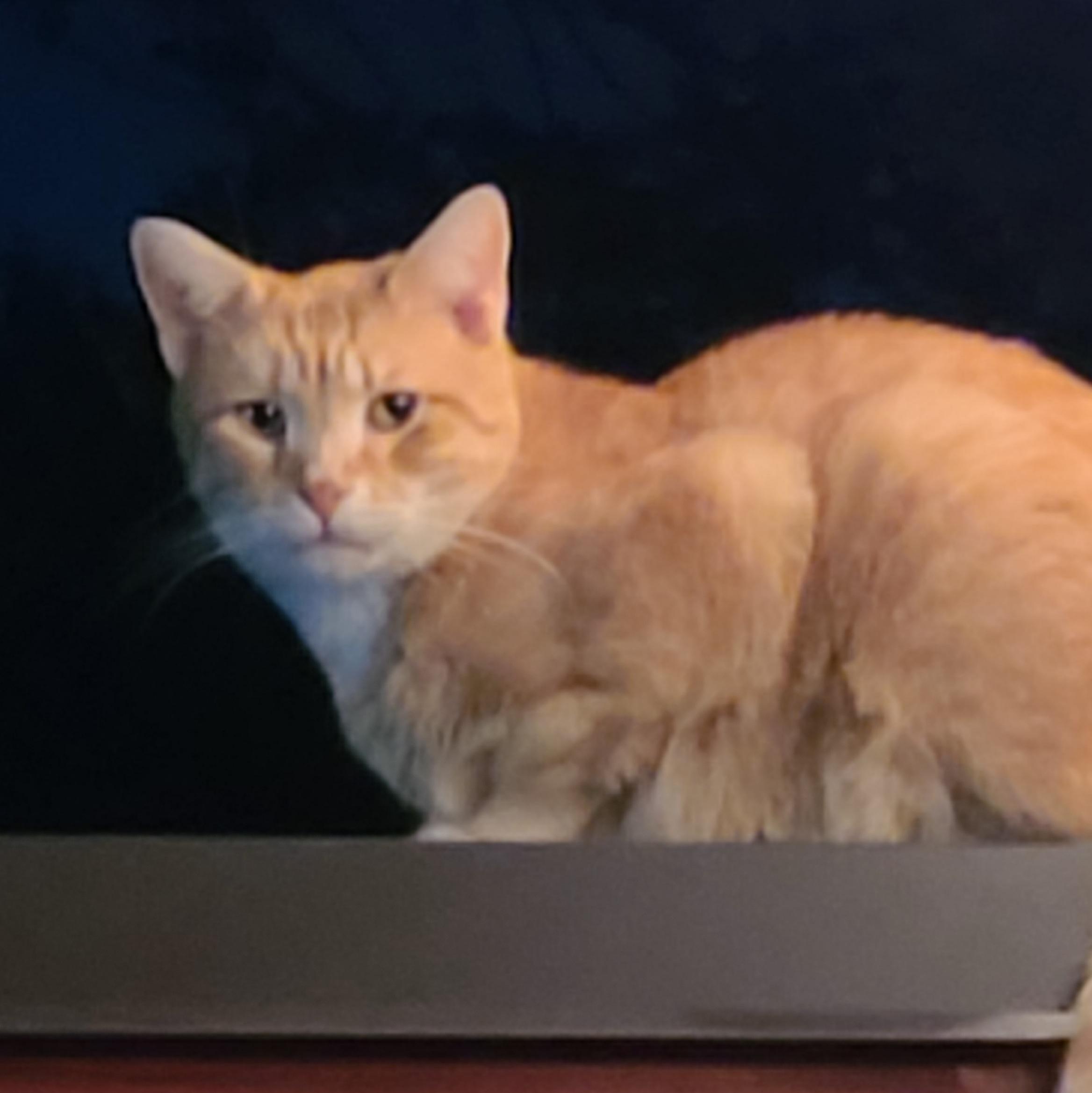Ogłoszenie darmowe. Lokalizacja:  Trenton. POZOSTAŁE - Wszystkie. Zaginal kot rudy  z Pennsylvania.